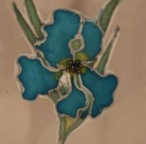 turquoise-iris